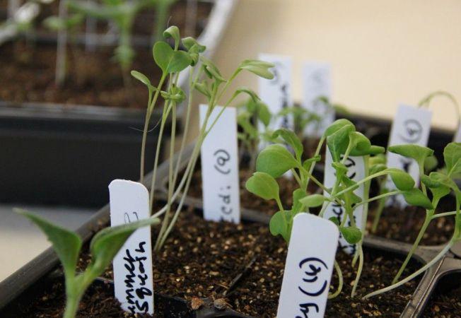 Tava pentru germinare: cum poti sa o realizezi singur
