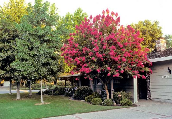 4 copaci pe care sa nu-i plantezi niciodata in gradina