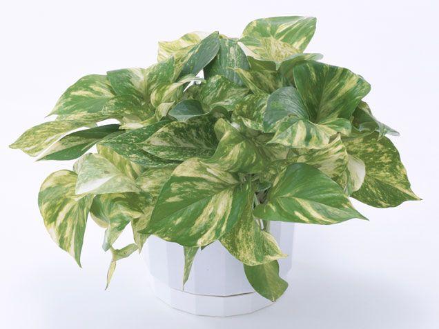 5 plante de interior care rezista si cand le neglijezi