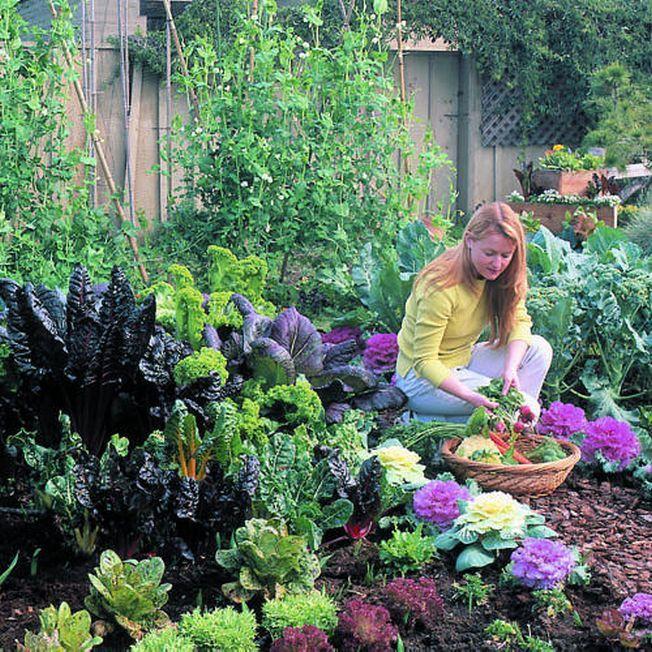 Legume proaspete chiar si in timpul iernii. Iata ce poti planta in gradina in sezonul rece