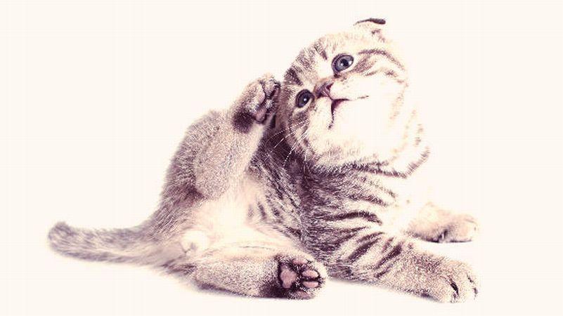 Caderea excesiva a parului la pisici: 4 cauze frecvente