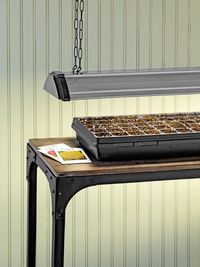 Cum sa plantezi seminte iarna, in interior