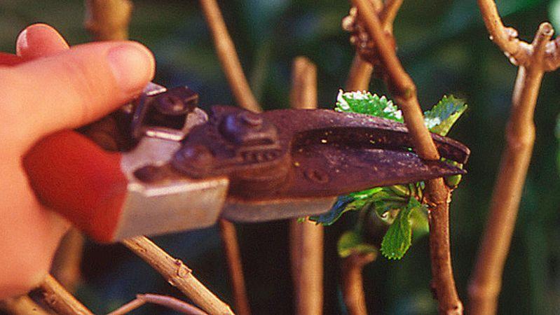 Ghid de taiere si ingrijire a plantelor iarna