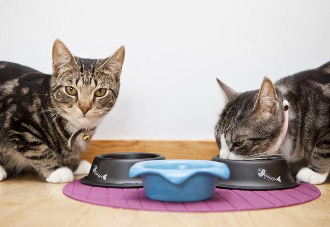 Pisica ta are un apetit alimentar scazut? 4 stimulente care-i redau pofta de mancare