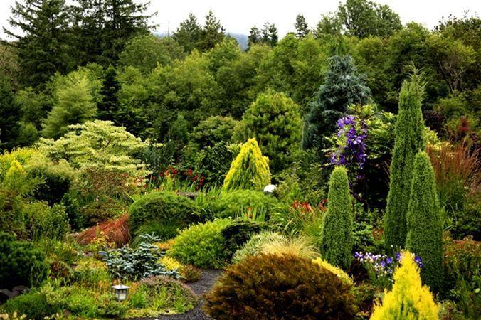 Da viata gradinii tale iarna: planteaza conifere