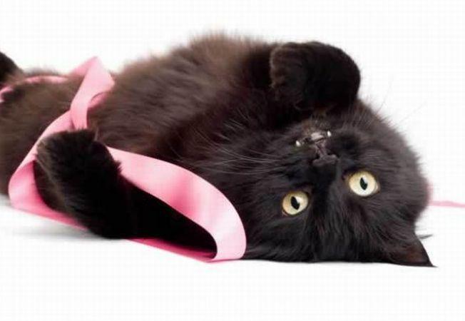 Delecteaza-te cu 5 poze cu pisici negre care te introduc in spiritul Halloweenului!