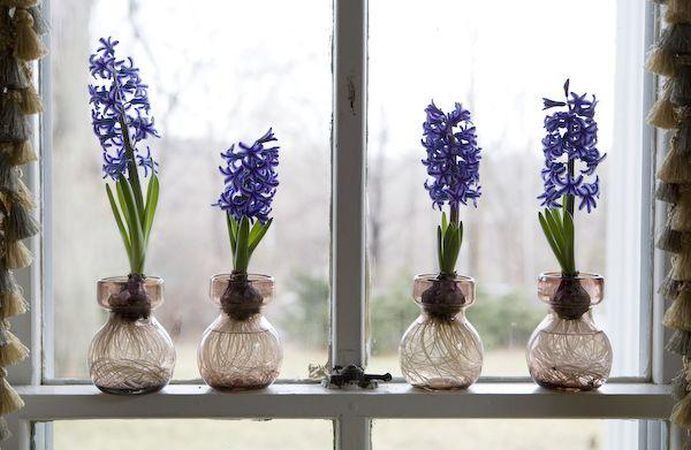 Adu primavara in casa ta: iata cativa bulbi care infloresc rapid in interior