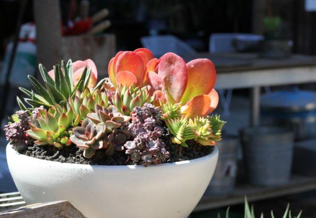 4 ponturi pentru ca plantele suculente de interior sa nu-ti mai moara