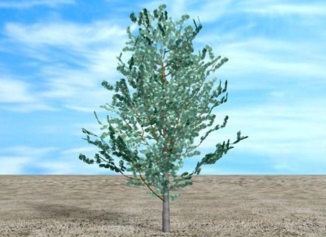 Arbori mereu verzi care cresc rapid