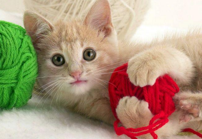 Obiecte din casa transformate de pisica in jucarii distractive