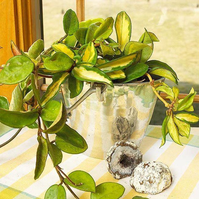 4 plante usor de crescut in casa