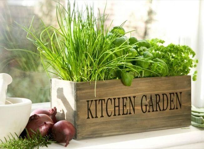 Fa-ti propria gradina de plante aromatice chiar in bucatarie