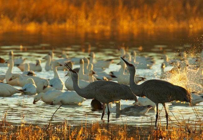 197 de specii de pasari sunt in pragul disparitiei
