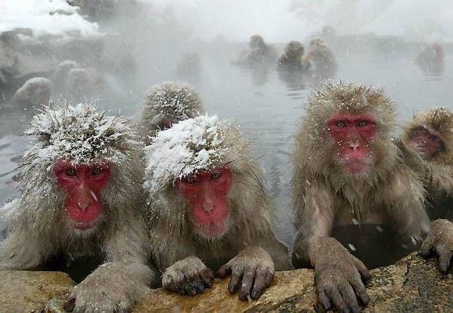 Moduri neobisnuite prin care animalele supravietuiesc frigului