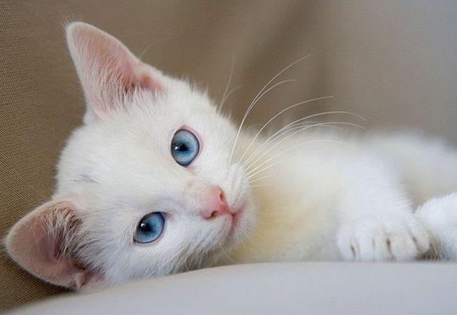 Muscatura de pisica poate cauza episoade depresive