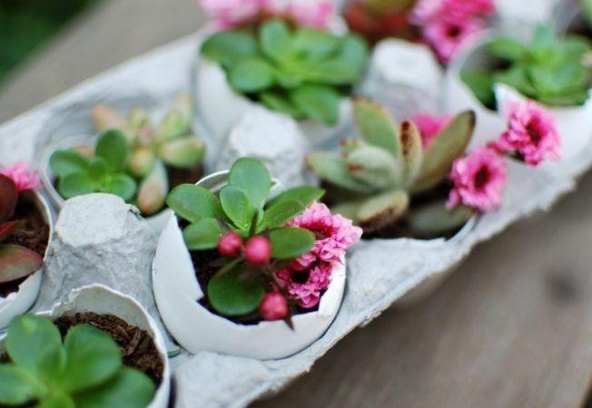 Pregateste-ti de acum plantele pentru o gradina minunata la primavera