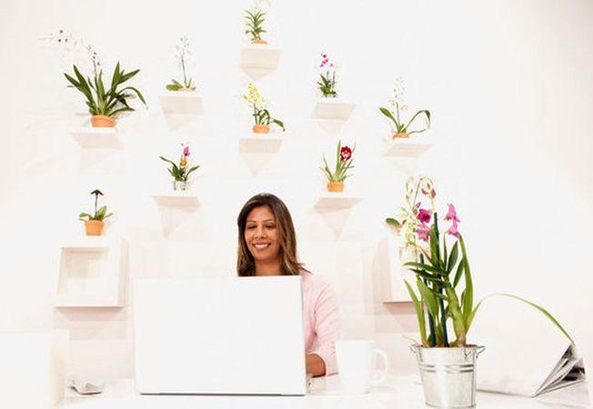 Vrei o marire de salariu? 5 plante de apartament care te ajuta in cariera