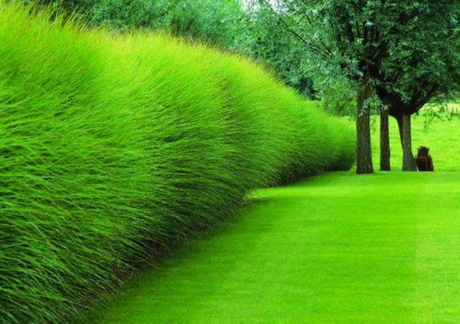 Cum sa alegi plantele ornamentale perfecte pentru gradina ta