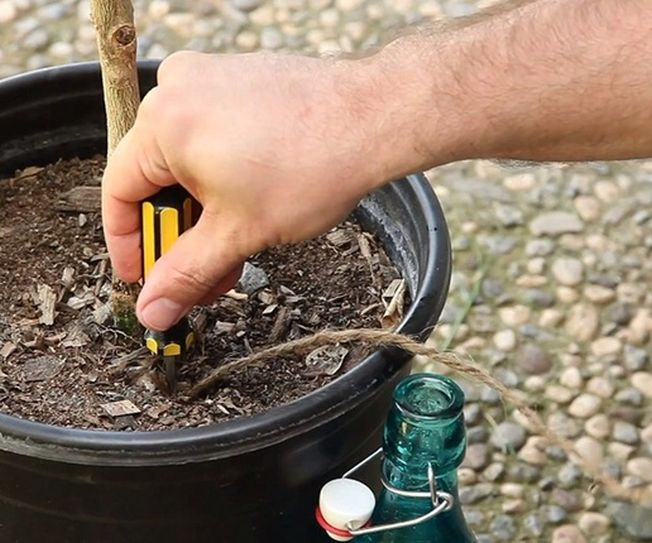 4 modalitati de a uda plantele cand este plecat in vacanta