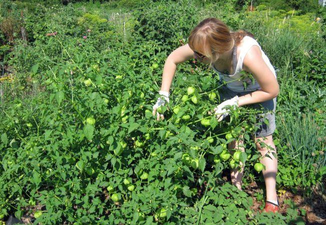 5 legume pe care sa le cultivi in gradina anul acesta