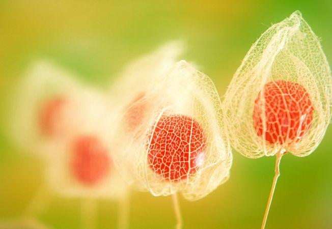 Plante care iti schimba pozitiv starea de spirit, in functie de zodie