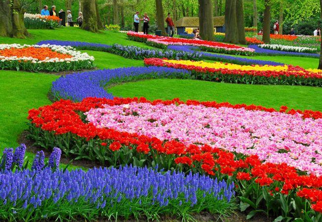 Gradina cu flori: 3 pasi simpli pentru a realiza