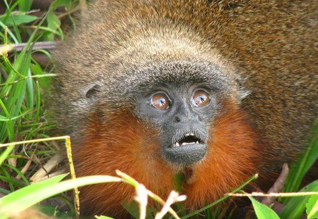 3 animale surprinzatoare despre care nu stiai ca pot vorbi intre ele exact ca oamenii
