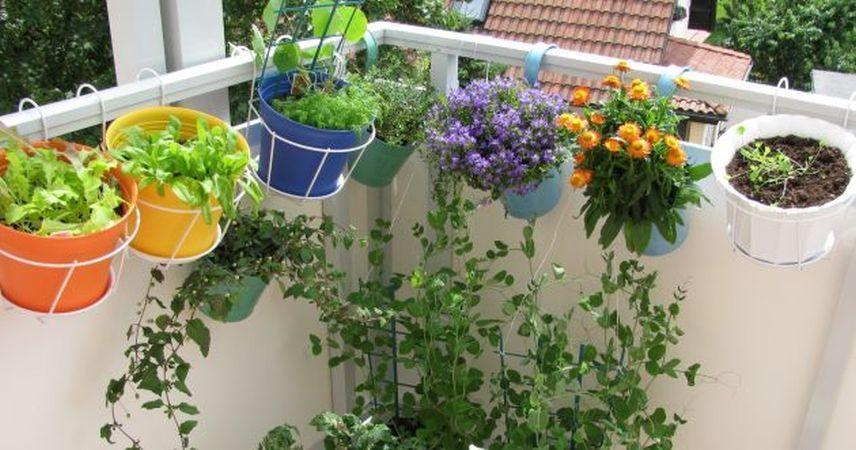 Plante rezistente la vant