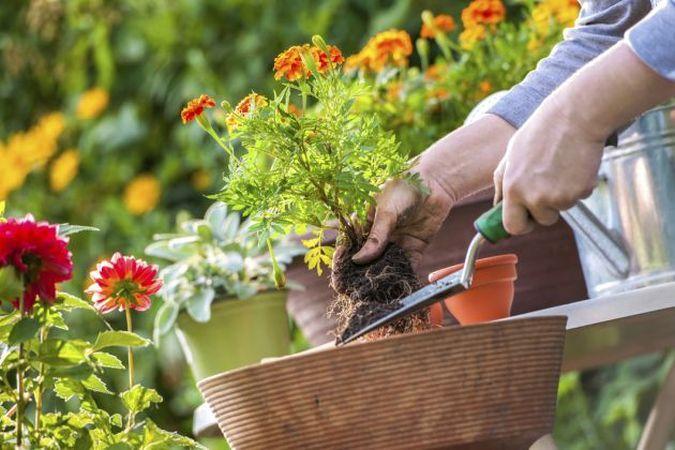 Cum sa ingrijesti plantele cand pleci in vacanta