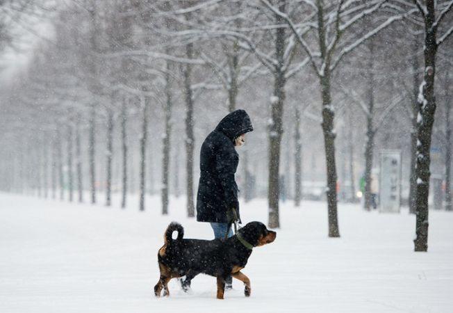 Cum sa iti plimbi in siguranta cainele pe timp de iarna