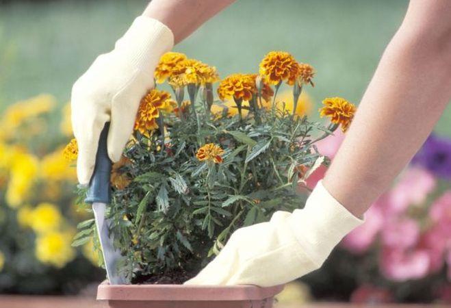6 pasi pentru a transplata corect plantele
