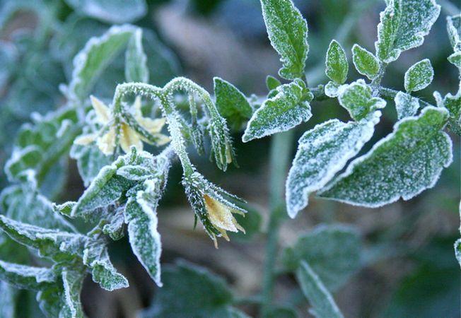 Gradina in ultima luna de iarna: cum o pregatesti pentru primavara