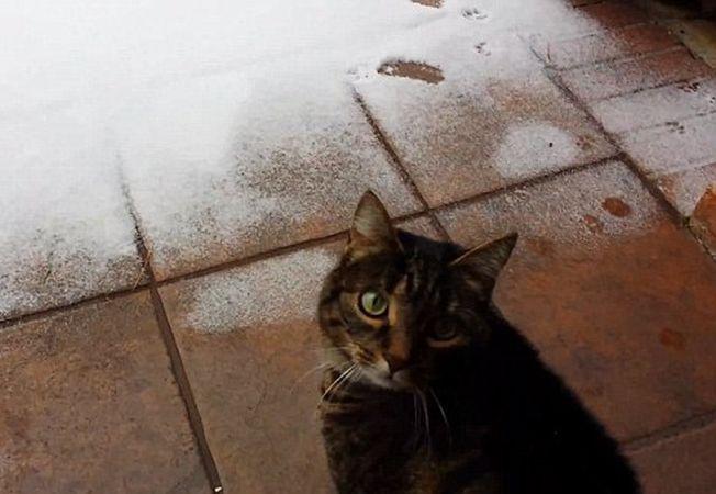 Reactia unei pisici la vederea zapezii pentru prima data!