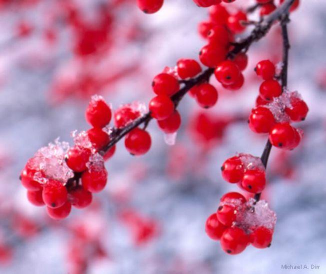 Plante pe care le poti creste in terasa pe timpul iernii