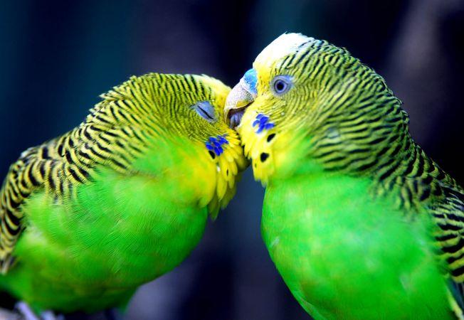 7 specii iubarete de animale. Le place sa se pupe si dezmierde la fel de mult ca oamenii (FOTO)