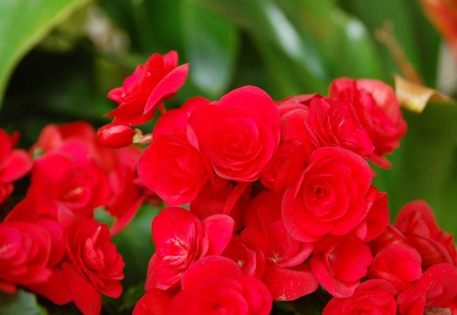 6 plante care infloresc constant