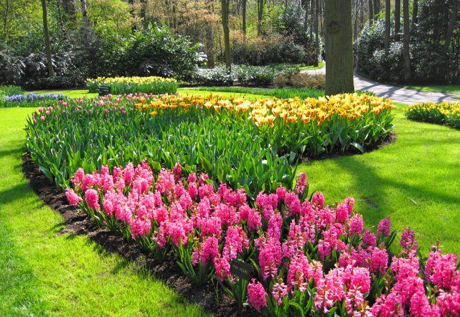 5 sfaturi importante pentru a alege florile perfecte pentru gradina ta