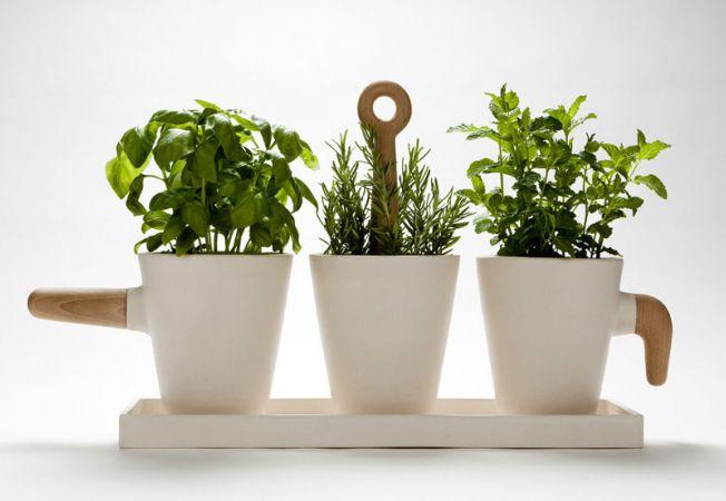 Farmacia din ghiveci: planteaza-ti propriile plante medicinale!