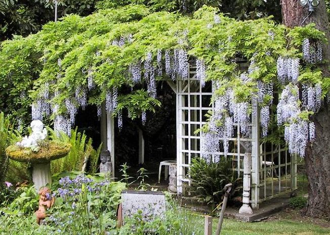 4 plante pe care trebuie sa eviti sa le plantezi in gradina