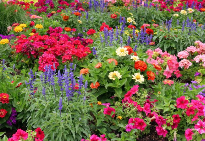 Planteaza bulbi de flori primavara pentru o gradina desavarsita in sezonul fierbinte!