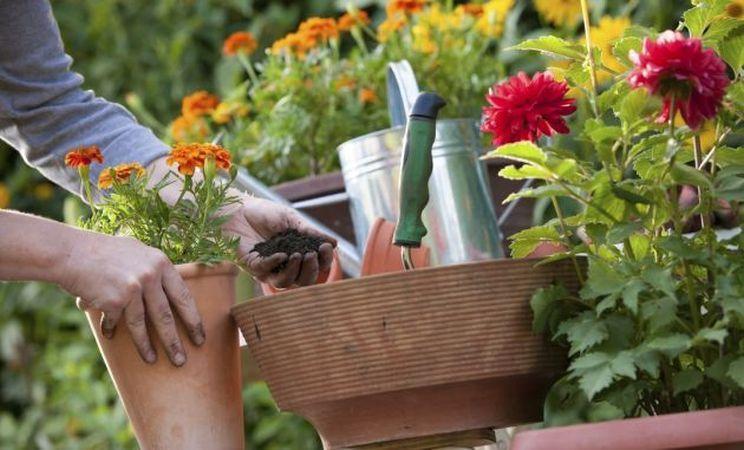 Care sunt florile ideale pentru a fi plantate in ghivece