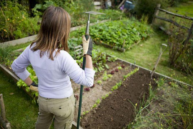 Primavara, anotimpul perfect pentru cultivarea primei gradini! Iata cativa pasi esentiali