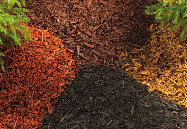 Mulciul, litiera gradinii tale: 4 tipuri pentru plante sanatoase si viguroase