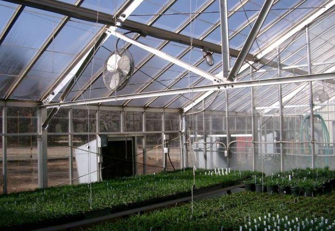 Ingrijirea legumelor din sera: tipuri de ventilare si la ce folosesc acestea