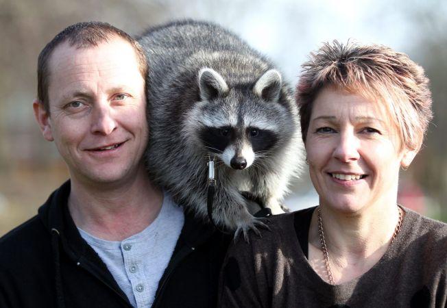 """Ratonul, animal de companie. Iata-l pe Zella, """"patrupedul"""" unei famili britanice"""