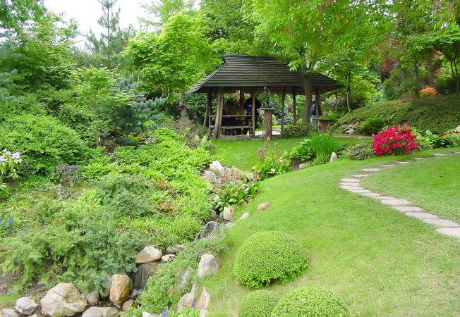 4 copaci si arbusti usor de ingrijit pe care trebuie sa ii ai in gradina ta