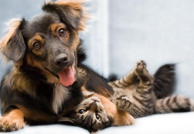 13 curiozitati simpatice despre animale