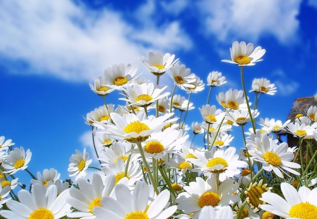 5 plante perene cu care sa iti infrumusetezi gradina proprie