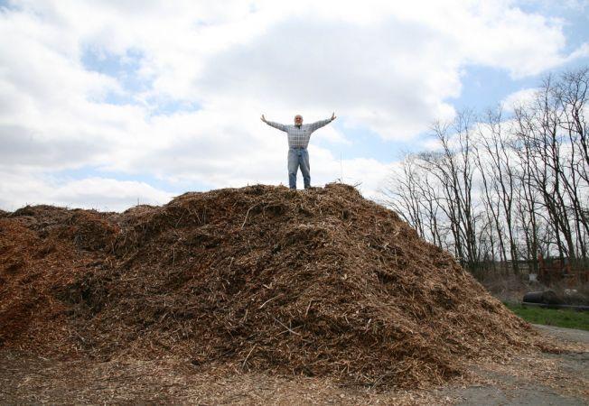 Compostul nu pare sanatos? Iata cum elimini cele mai comune probleme!