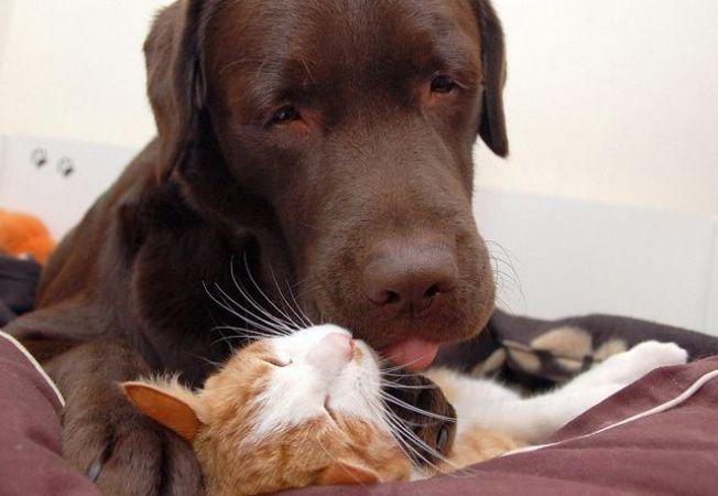 Dovada ca pisicile si cainii pot fi cei mai buni prieteni